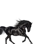 Old Town Road by Lil Nas X